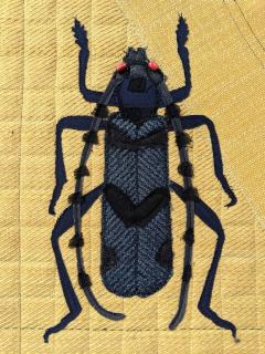 Navy Beetle