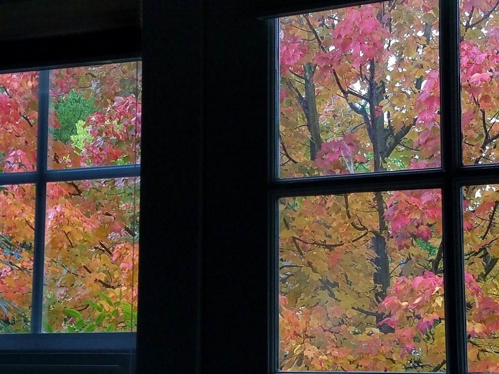 The maple tree outside my studio window