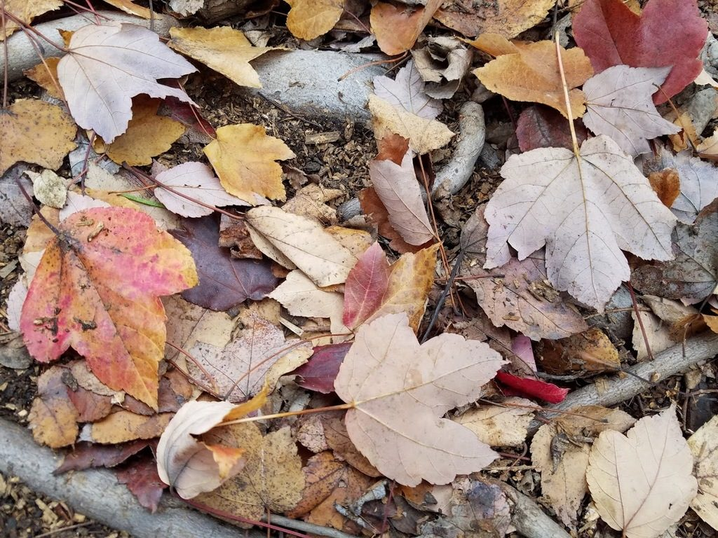 Fallen leaves in my yard
