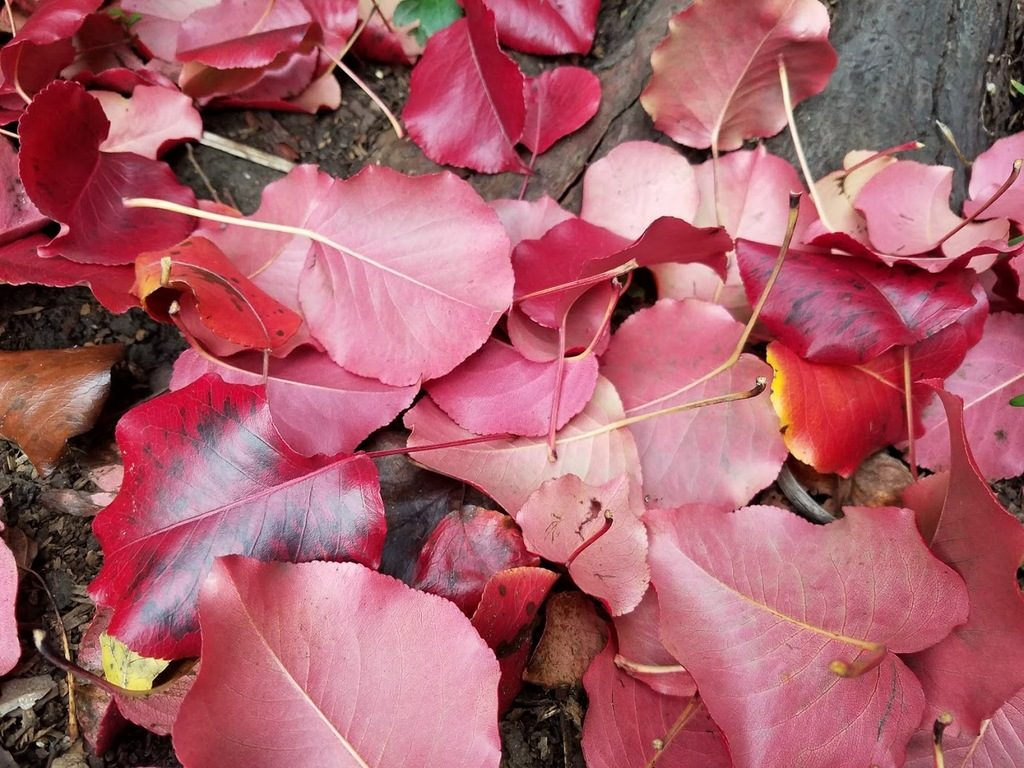 Fallen leaves in my garden