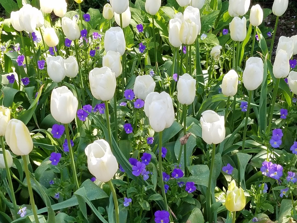 Flowers at Filoli gardens