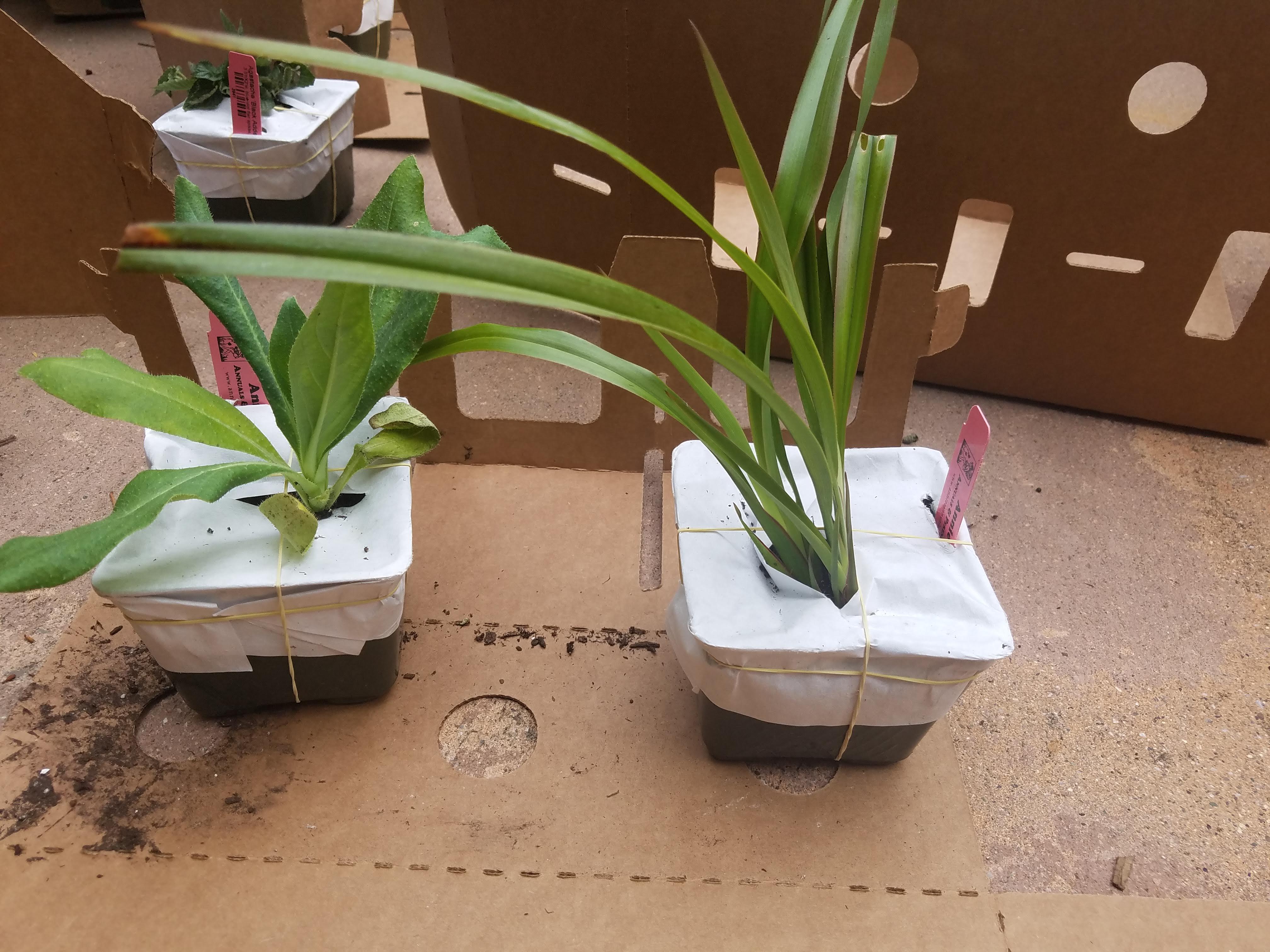 Mail-ordered seedlings